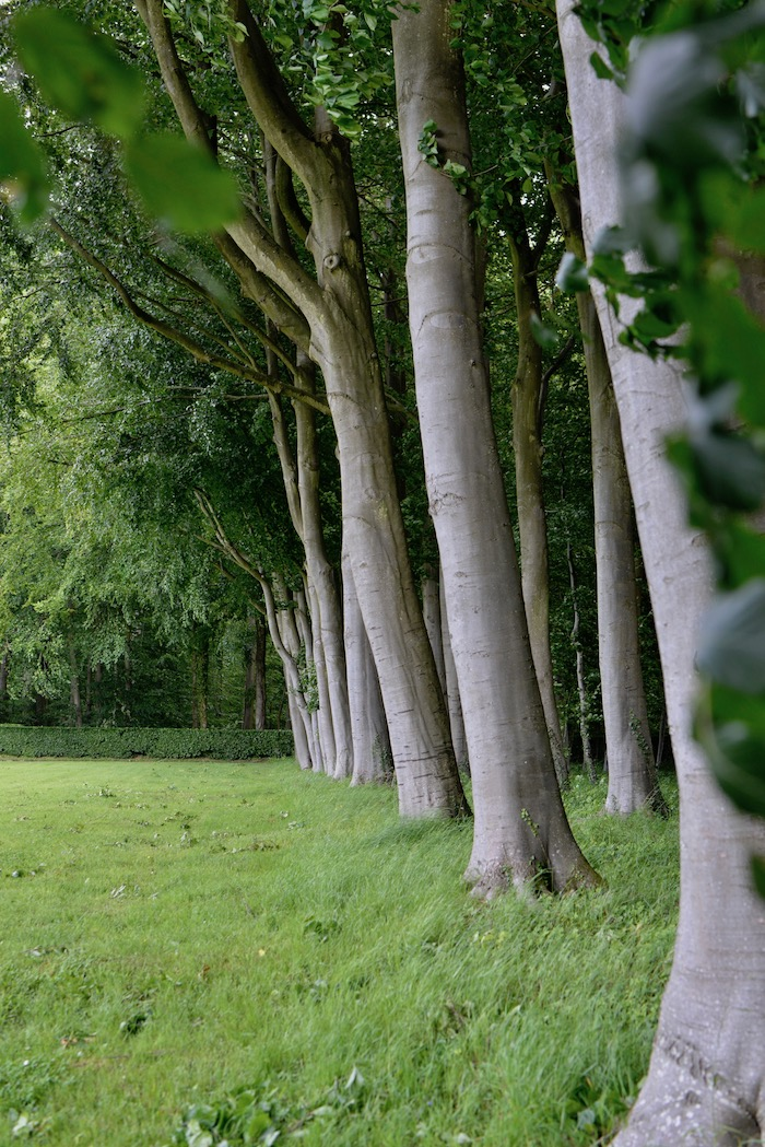 Trees lining the property of Chateau Miromesnil in France