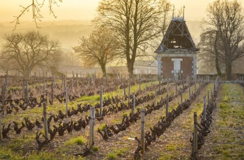 winter vineyard in burgundy