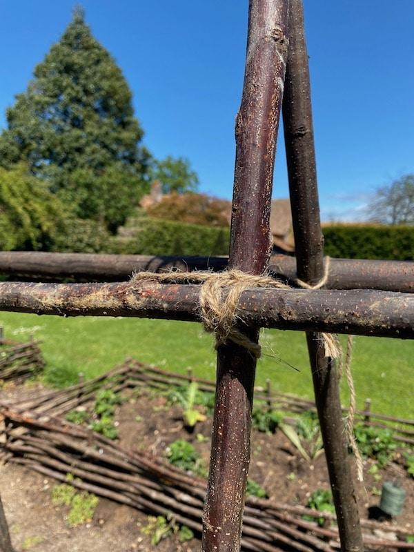 fixing canes in vegetable garden snapshot weekend