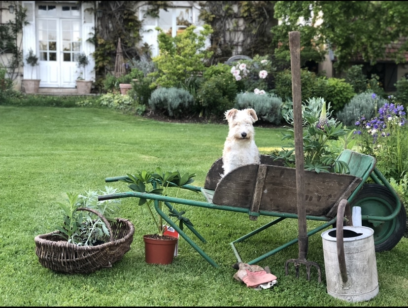 snapshot weekend dog in garden