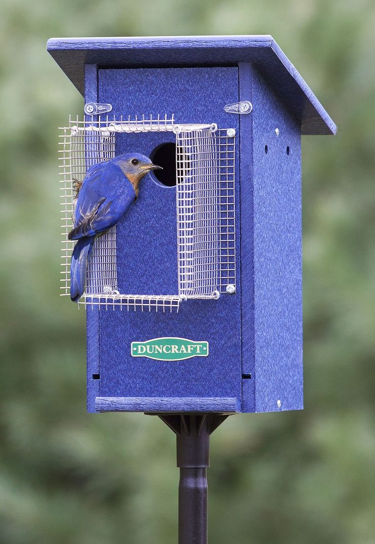 Best 25 Bluebird House Plans Ideas On Pinterest This Month