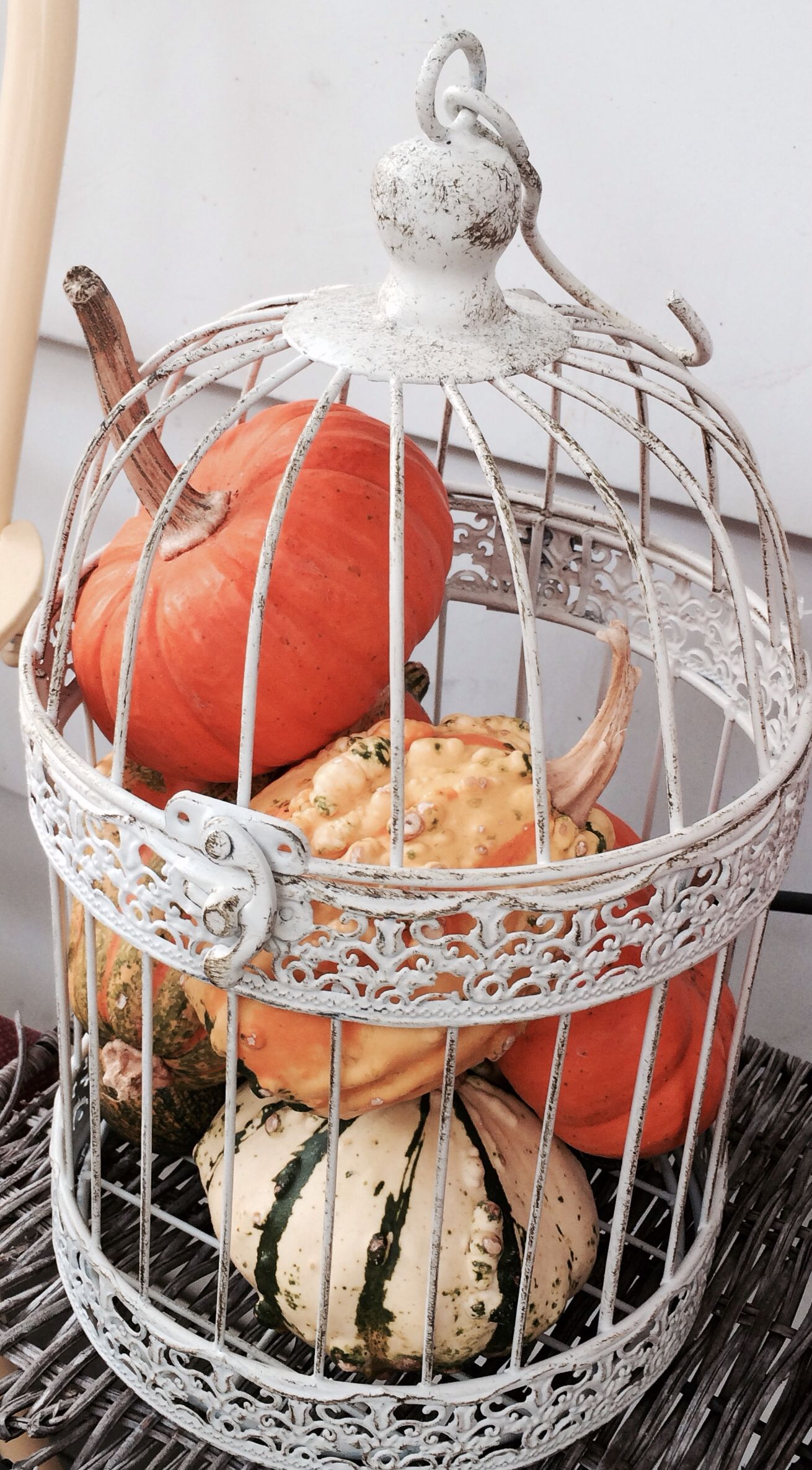 Best Gourds In A Bird Cage Bird Cage Decor Halloweeeeen In This Month