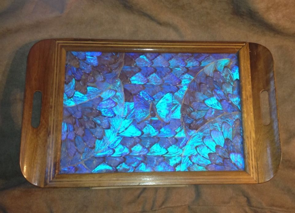 Best Vintage Blue Morpho Butterfly Wing Tray Made In Brazil This Month