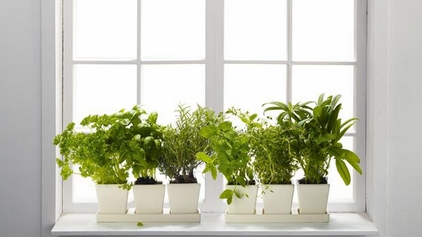 Best 45 Window Sill Decoration Ideas – Original And Creative This Month
