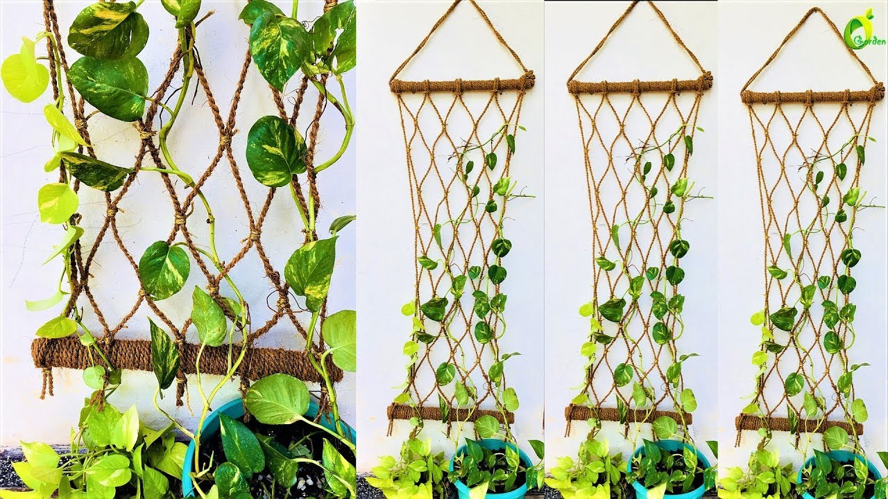 Best Money Plant Money Plant Growing Style Money Plant Wall This Month