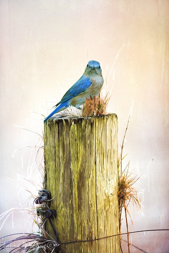 Best Bird Art Print Home Wall Decor Female Blue Bird Wooden This Month