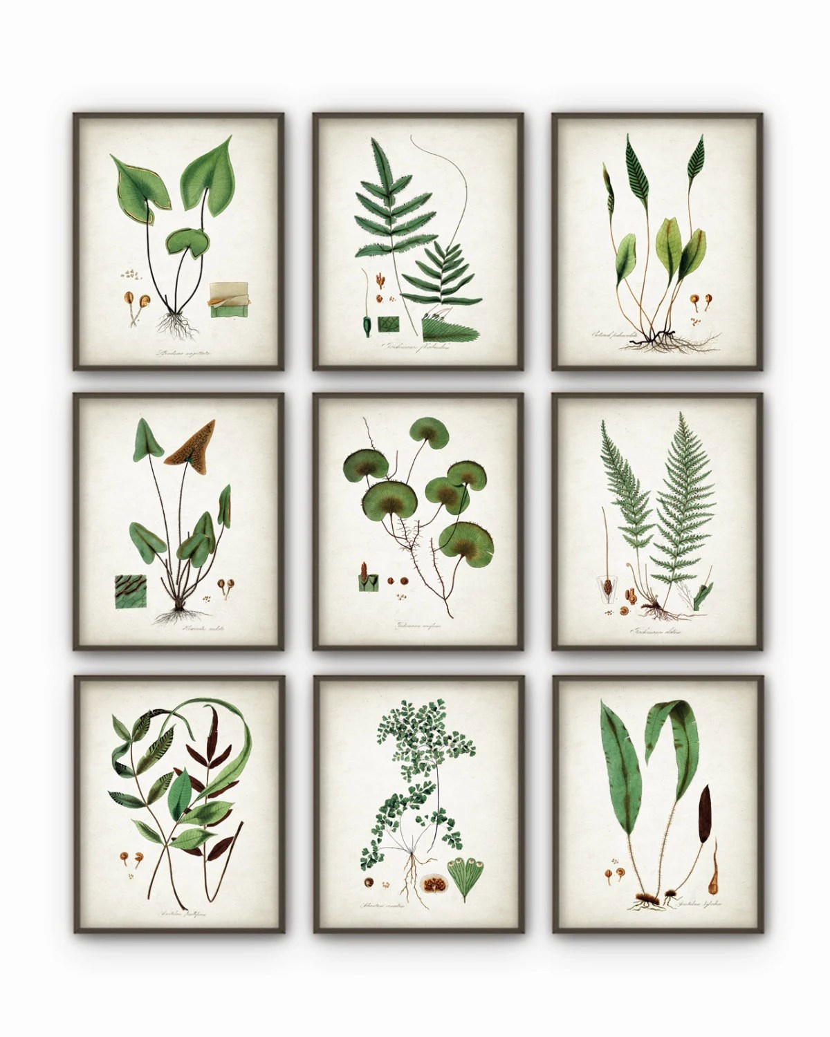 Best Green Plant Wall Decor Set Of 9 Botanical Art Posters This Month