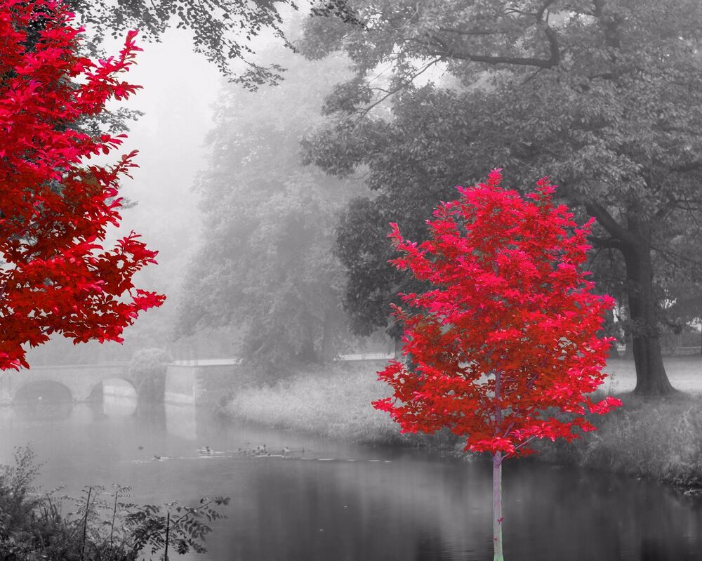 Best Red Gray Black Home Decor Wall Art Photo Print Trees This Month