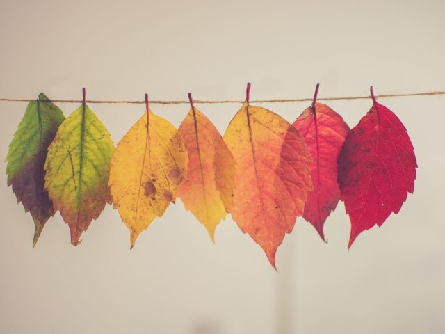 To Everything There Is a Season….