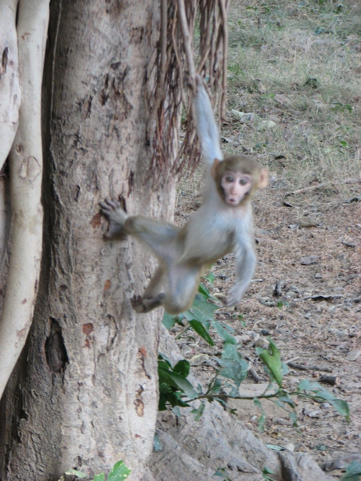Watch the expression on this monkey's face after hearing a Cobbledick joke.
