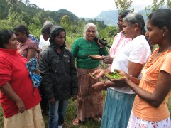 The ladies are being shown how to pick the best leaves for the tea.