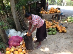 Enjoying a tambili (King coconut) at the side of the rode brought back many thirst quenching memories.