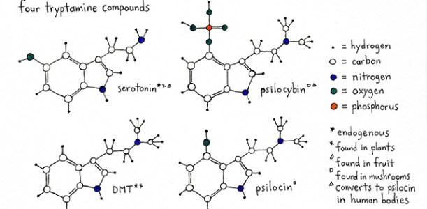 פסילוסיבין – פטריות הזיה – Psilocybin