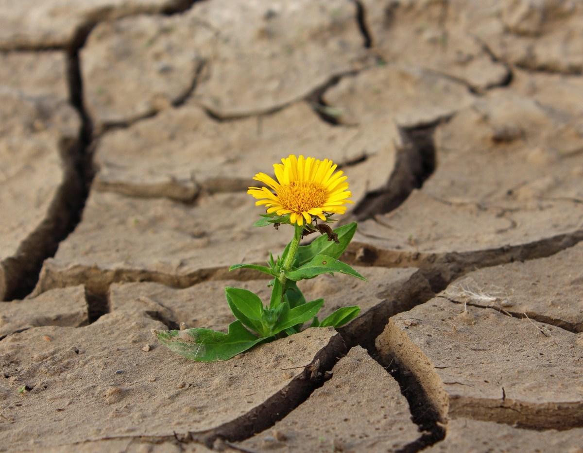 Paraszat Chajej Sara – Otrząśnięcie się po śmierci i kontynuacja życia