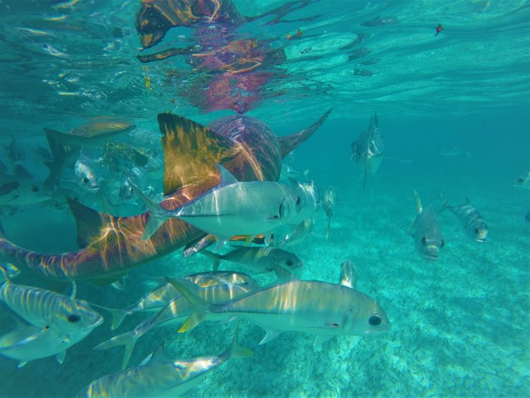 Snorkeling at Caye Caulker Belize