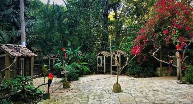 Macaw mountains, Copan Honduras