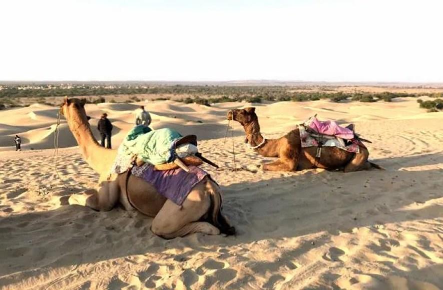 Camel safari at Khuri dunes