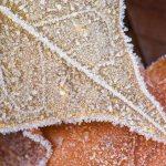 Frost on Leaf, Missouri