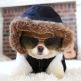 White-Pomeranian-Puppy-Dressed-Up-for-Winter-750x750