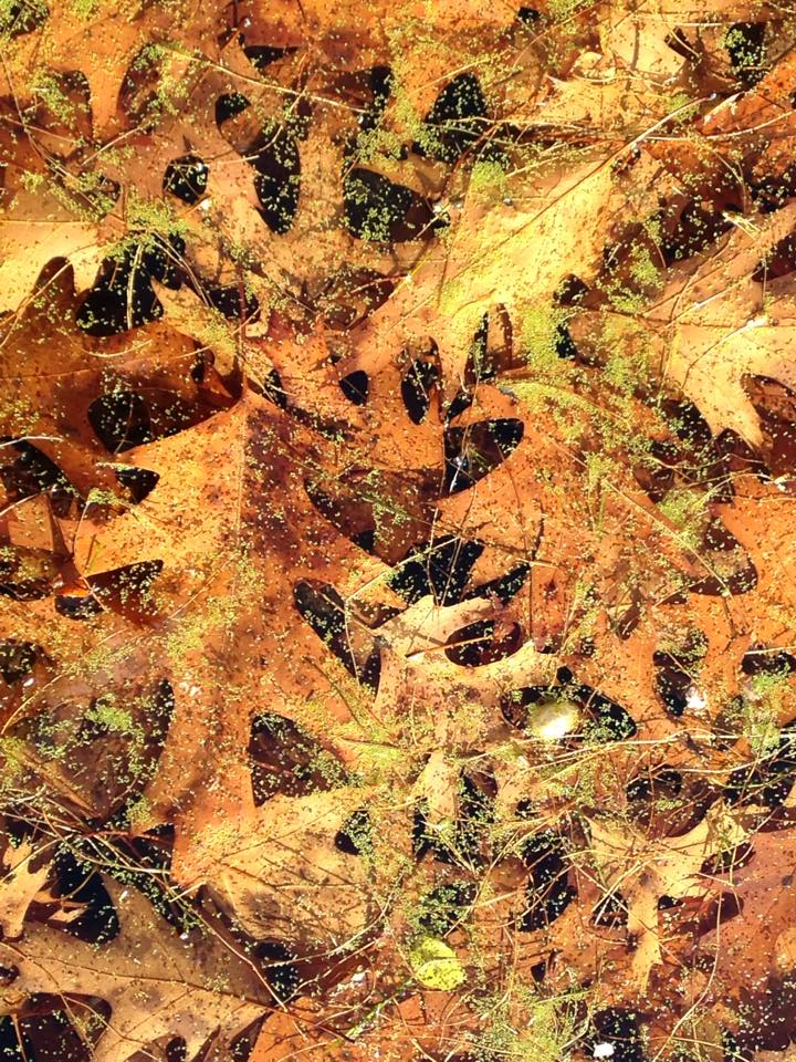 Fall Leaves Water Algae Lake Minnesota