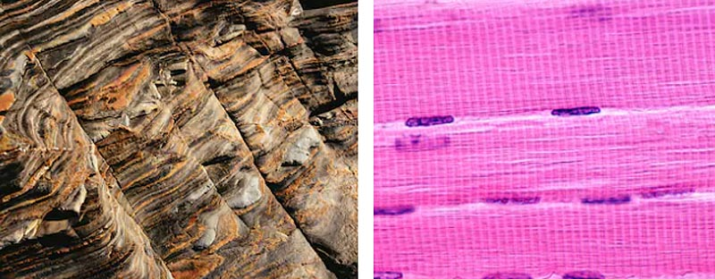 Striations Glacial Muscle