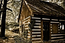 Shack in the Woods