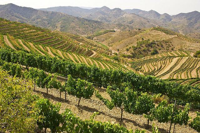 Scenic Vineyards for Wine Tasting - Cims de Porrera Vineyards, Catalonia, Spain