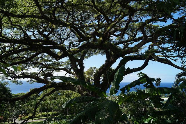 The Island Tour of St. Kitts - Caribelle Batik Shop