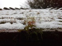 Mosses capture the snow melt on the roof of the well house.