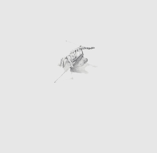 David Conn etching aquatint drawing