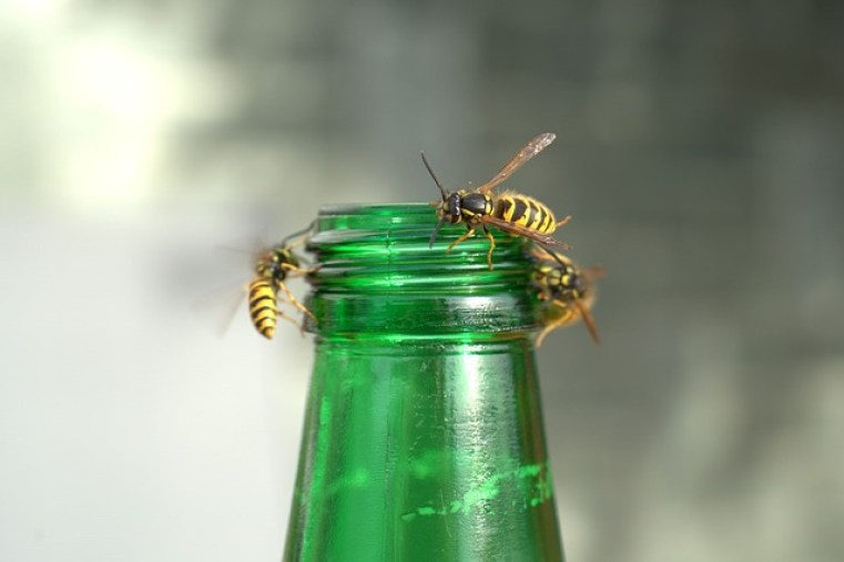 How to get rid of wasps this spring