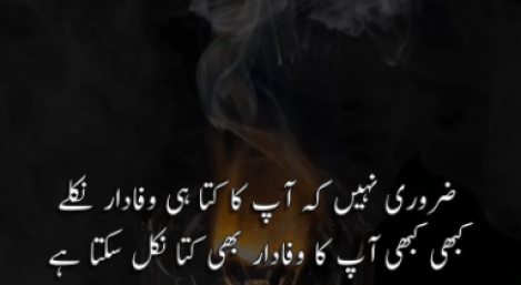 dhokebaaz dost shayari poetry