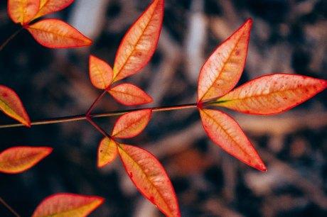 penera_walnutgrove_022