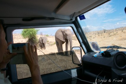 Ruaha National Park - they are coming to check us out