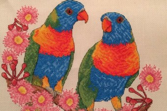 Parrots – Magazine commission stitch.