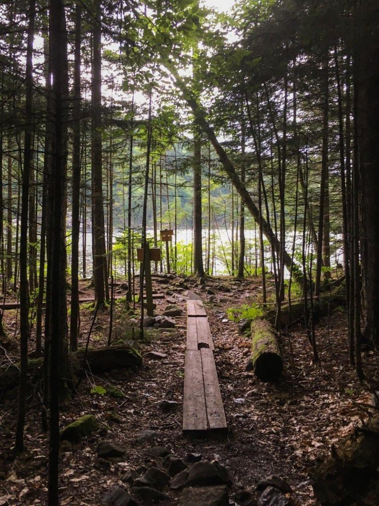 A boardwalk plank marks the trail in a dense forest.