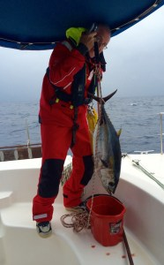 a beautiful yellow fin thuna with 7.7 kg and 77cm