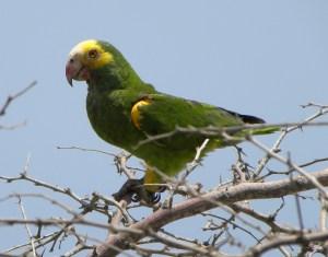 und nochmal ein Papagei