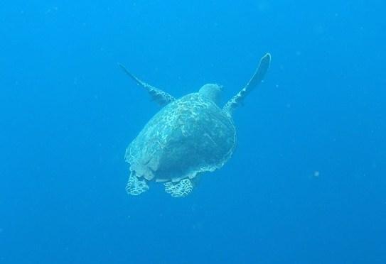 Weitere 4 schöne Wochen in Bonaire