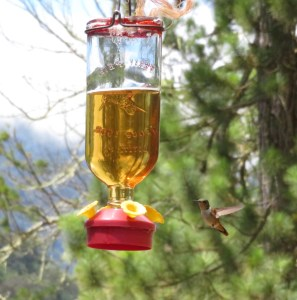 we meet a humming bird at the birds feeding station of the waterfalls