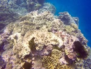 Haapai Tonga snorkeling