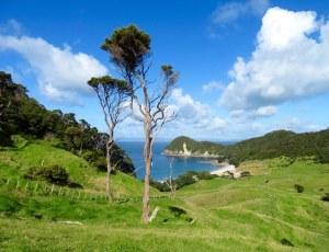 Hiking Whangarei heads