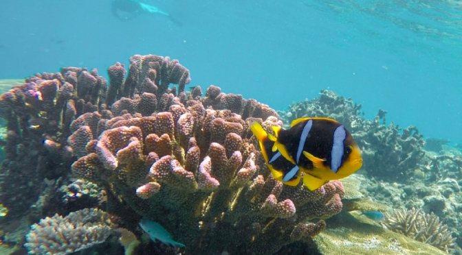 Up and down in Fiji West – Lautoka, Mamanucas and Yasawas