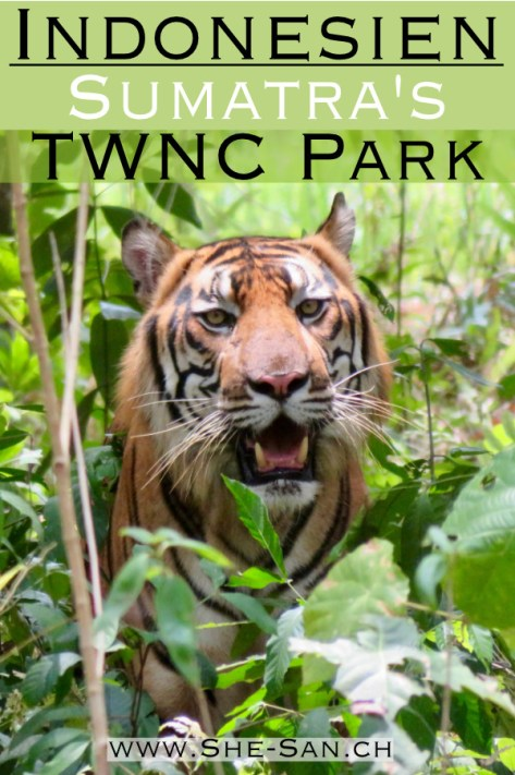 Tambling Wildlife Nature Conservation Park in Sumatra Indonesien