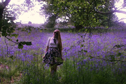 Into the bluebell woods