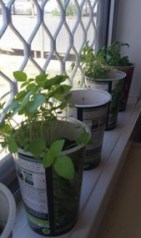 My window garden in Cunnamulla