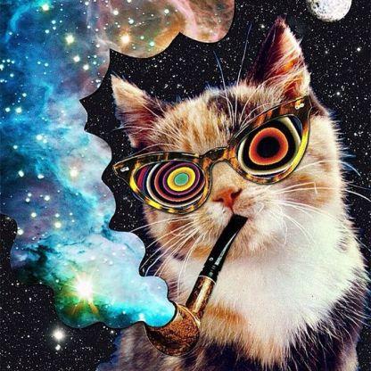 spacecat 2