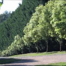 400 metre driveway