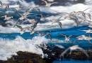 Take Oustanding Wildlife Photographs