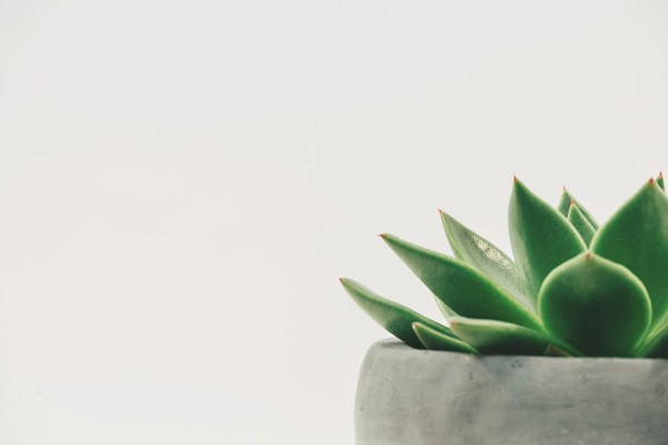Minimalist living tips for a stress-free and decluttered life